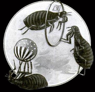 Flea Circus3 - Professor William Heckler's Flea Circus