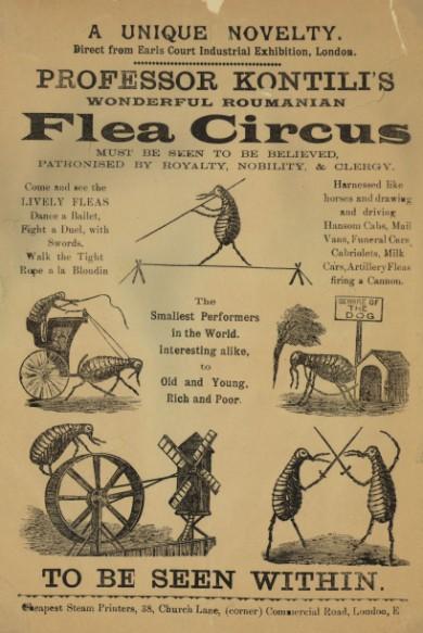 Flea Circus5 - Professor Kontili's Flea Circus