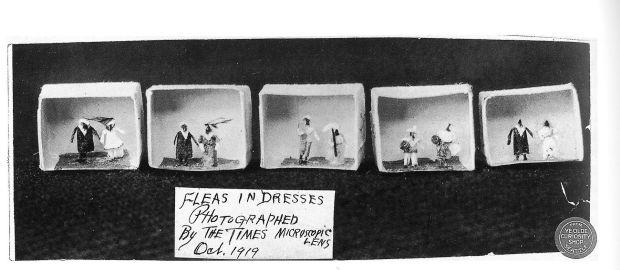 Flea Circus9 - Fleas at the Olde Curiousity Shop